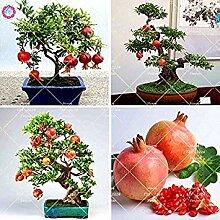 Vistaric 50 stücke Garten Mini Bonsai Granatapfel