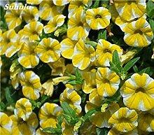 Vistaric 50 Stücke Petunie Blumensamen Petunien