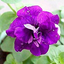 Vistaric 50 teile/paket Petunien Blütenblätter