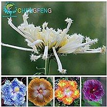 VISTARIC Blumensamen Aquilegia viridiflora, lila