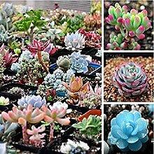 Vistaric Garden Plant Flowers 50 Stück weißer