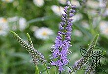 Vistaric Geeignet für Clump Pflanzen Veronica