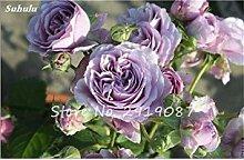 VISTARIC gemischt: Import Hydrangea-Blumensamen,