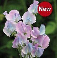 Vistaric Heißer Verkauf 10 Samen/Tasche Erbse