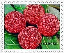 Vistaric Heißer verkauf samen arbutus bayberry