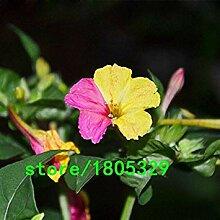 Vistaric Heißer Verkauf Seltene Gelbe und Pink