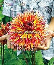 VISTARIC Lila: 50 PC/bag Rare Bonsai Azalee sät