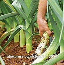 VISTARIC Lila: Gemüsesamen Habanero orange