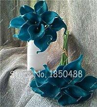 Vistaric Mehrfarbige Calla-Blume Wahre