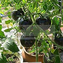 Vistaric SCHWARZE Tomatensamen sehr lecker