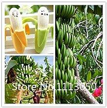 Vistaric Verkauf!100 stücke 10 arten Bonsai