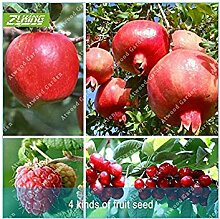 Vistaric ZLKING 4 Art Fruit Bonsai Fruit Tree