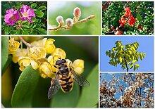Vitamine für die Biene - Bienennährgehölze im