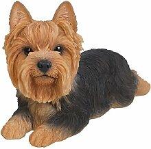 Vivid Arts Blumentopf PAL Range–Yorkshire Terrier