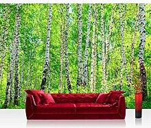 Vlies Fototapete 400x280 cm PREMIUM PLUS Wand Foto Tapete Wand Bild Vliestapete - BIRCH FOREST - Birkenwald Bäume Wald Sonne Birkenhain Birke Birken Gras Natur Baum - no. 007