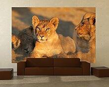 Vlies Fototapete - Afrikanisches Löwenbaby -
