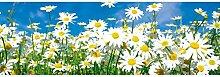 Vlies Fototapete GÄNSEBLÜMCHEN 330 x 110 cm | Wandbilder XXL - Riesen Wandbild - Wand Dekoration - Vliestapete - Wandtapete | PREMIUM VLIES QUALITÄT