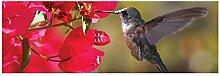 Vlies Fototapete KOLIBRI 330 x 110 cm   Wandbilder XXL - Riesen Wandbild - Wand Dekoration - Vliestapete - Wandtapete   PREMIUM VLIES QUALITÄT