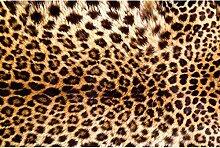 Vlies Fototapete LEOPARDENFELL 330 x 220 cm   Wandbilder XXL - Riesen Wandbild - Wand Dekoration - Vliestapete - Wandtapete   PREMIUM VLIES QUALITÄT