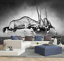 Vlies Tapete Poster Fototapete Antilopen Afrika