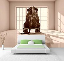 Vlies Tapete XXL Poster Fototapete Elefant Farbe