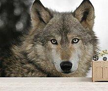 Vlies Tapete XXL Poster Fototapete Wolf Farbe