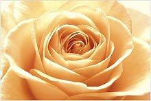 Vliestapete - Blumentapete Sweet Orange Rose