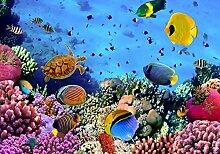 Vliestapete Korallenriff mit Fischen 400cm x 280cm
