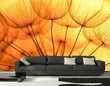 Vliestapete Pusteblume Orange VT390