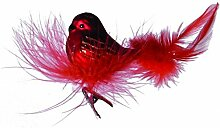 Vogel rot auf Federnes