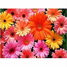 Volle 5D Diy Farbe Chrysantheme Hand Stickerei