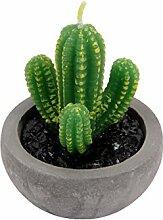 Wachskerze Kaktus im Zement Topf Dekokerze