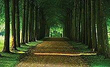 Wald gasse fototapete wandbild vlies natur für