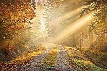 Wald im Herbst Foto-Tapete 4-teilig - Fototapete Wallpaper 232x315cm. Beigelegt sind eine Packung Kleber und eine Klebeanleitung.