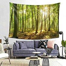 Waldbäume Rüssel Natur Grün Sonnenlicht