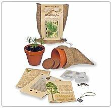 Waldkiefer  -  Pflanze einen Baum!