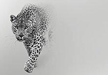 Wallarena Fototapete Leopard Jaguar Tiger Tiere