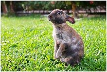 Wallario Glasbild Kaninchen im Garten mit süßem