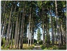 Wallario Schneidbrett Stiller Waldweg, ESG-Glas,
