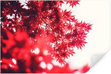 Wallprints - Wallprint Ahornbaum im Herbst