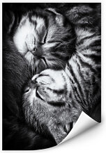 Wallprints - Wallprint Jancova - Sweet Kitten
