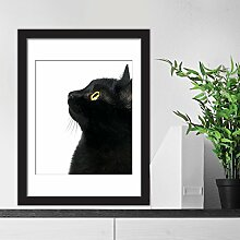 "Walplus """"Poster – Black Cat Focus"""" Dekoration, mehrfarbig"