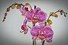 Wandbild 1200 x 690mm Orchidee Fototapete Poster