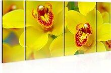 Wandbild - Orchids - intensity of yellow color