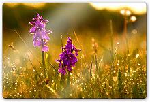 Wandbilder - Glasbild Blumen im Morgentau