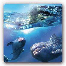 Wandbilder - Glasbild Dolphins Underwater