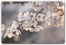 Wandbilder - Glasbild Kirschblütenzweig