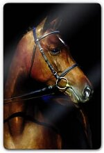 Wandbilder - Glasbild Stallion