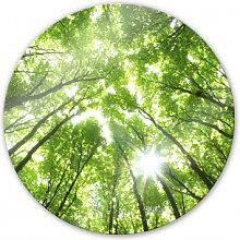 Wandbilder - Glasbild Sunny Forest 2 - rund