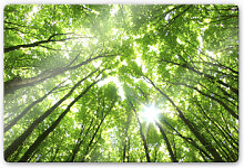 Wandbilder - Glasbild Sunny Forest 2